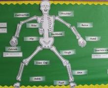 science skeleton image