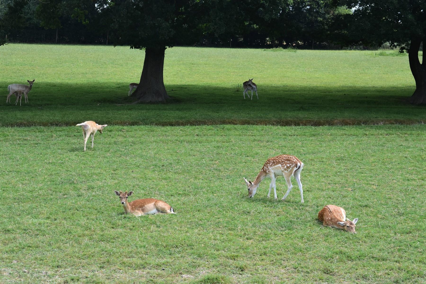 British Wildlife Centre 1