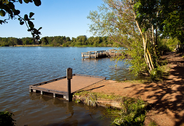 Fleet pond 3