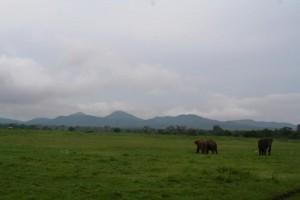 sri-lanka-trip-november-2015