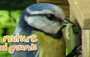 see-nature-schools-bird-box-project