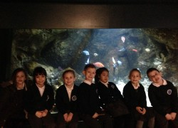 Year 2 Trip to London Aquarium
