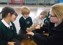 Reptiles Wow Day