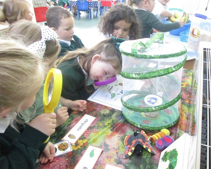 Caterpillars and sunflowers help with lessons