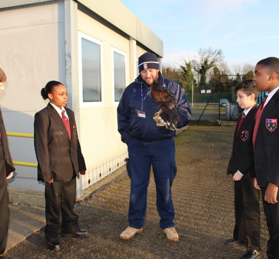 Read more - Milo the Harris Hawk visits Cranford