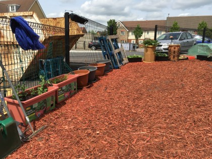 Our Chickens and Allotment!