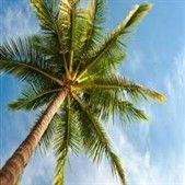 palm web