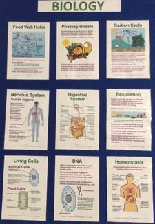 Biology board