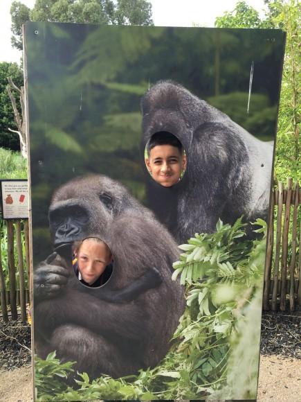 Jem & Hassan as Gorillas!