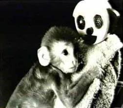 Harlow's Monkeys image