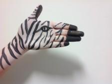 h and b zebra hand