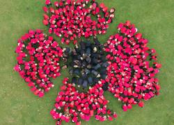 Remembrance Living Poppy