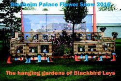 Blenheim 2016 - Diary of a Show Garden - DAY 4 - 16/6/2016