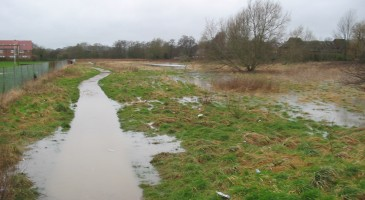 Save the Petersfield Water Meadows