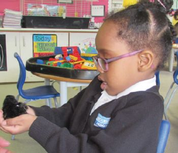 Chicks Welcomed to Reception